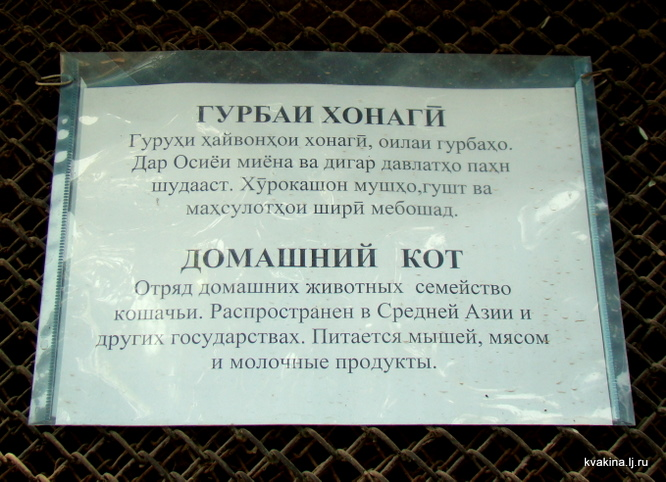 Гурбаи Хонагй