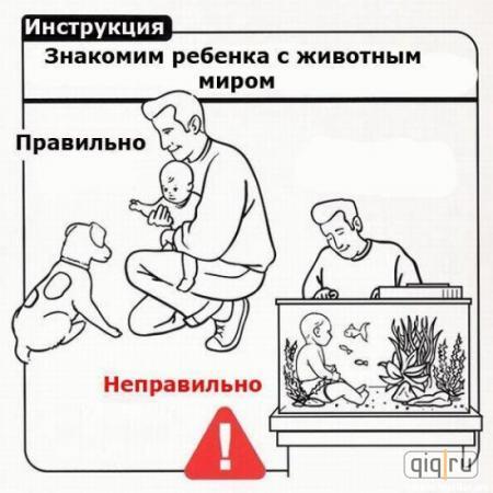 Животный мир для детей