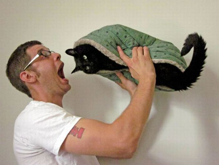 Съесть кота