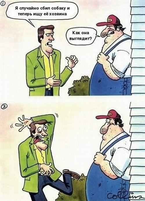 Сбил собаку