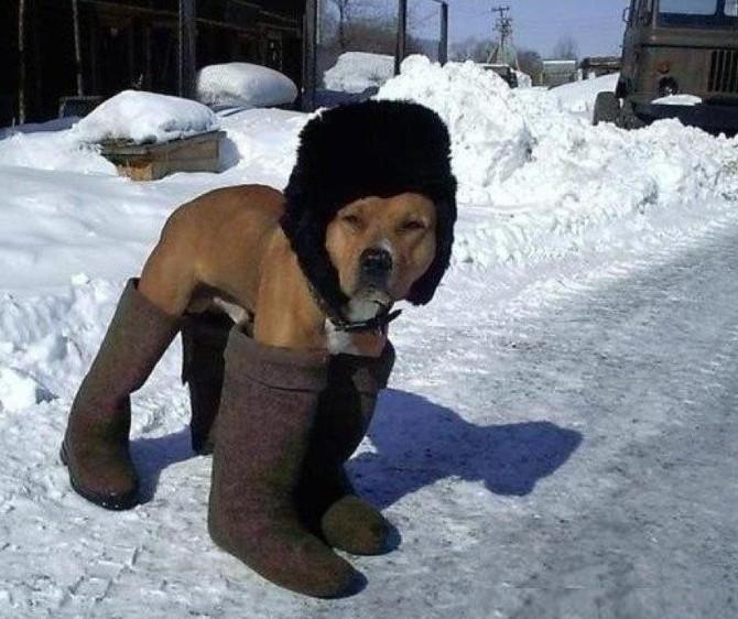 Сельская собака