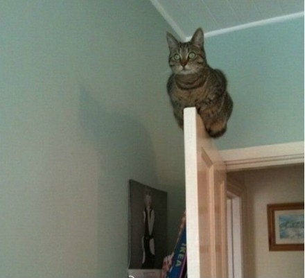 Кошак на двери