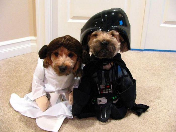 Собаки из Star Wars