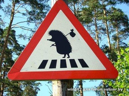 Осторожно ёжики