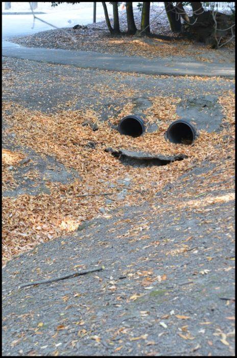 Веселая канализация