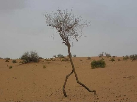 Бегущее дерево