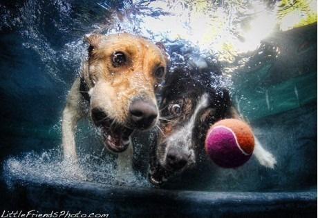 За мячиком в воду