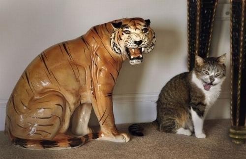 Я тигр!