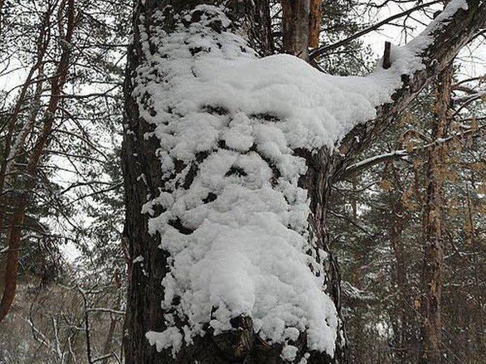 Лицо на дереве