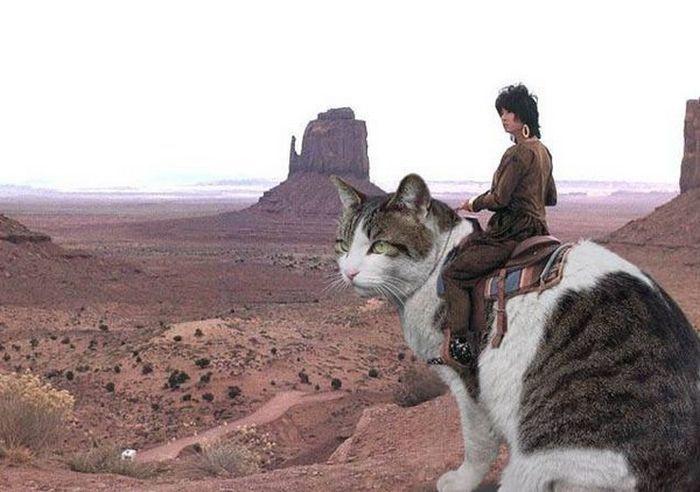 Наездники кошек