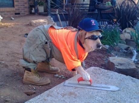 Собака-рабочий