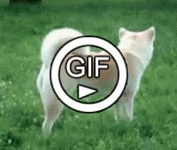 Прыжок через собаку