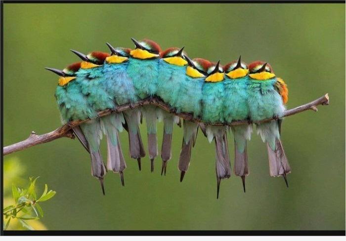 Гусеница? ... ах птички!