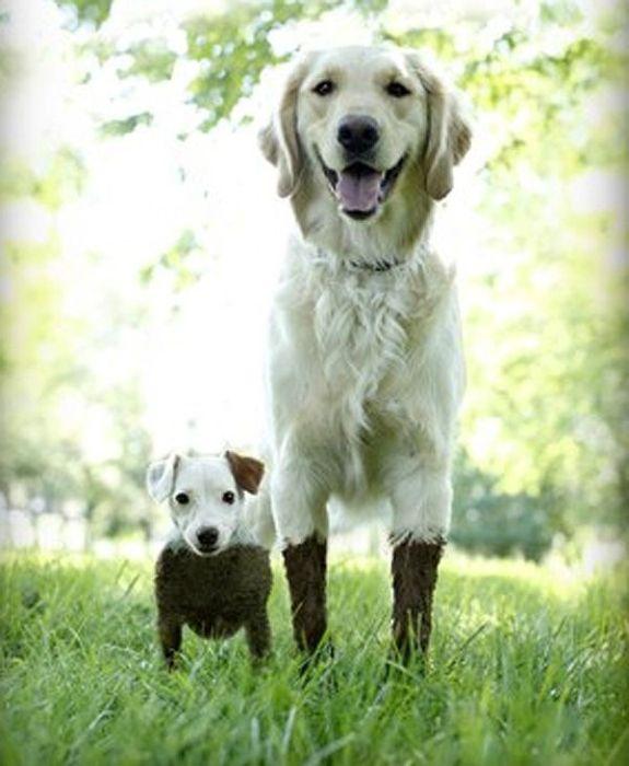 По грязи