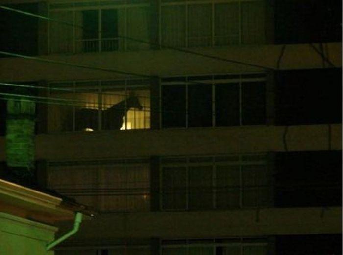 Конь на балконе