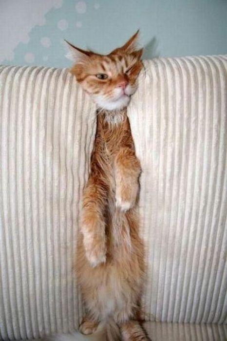 Кот между подушек