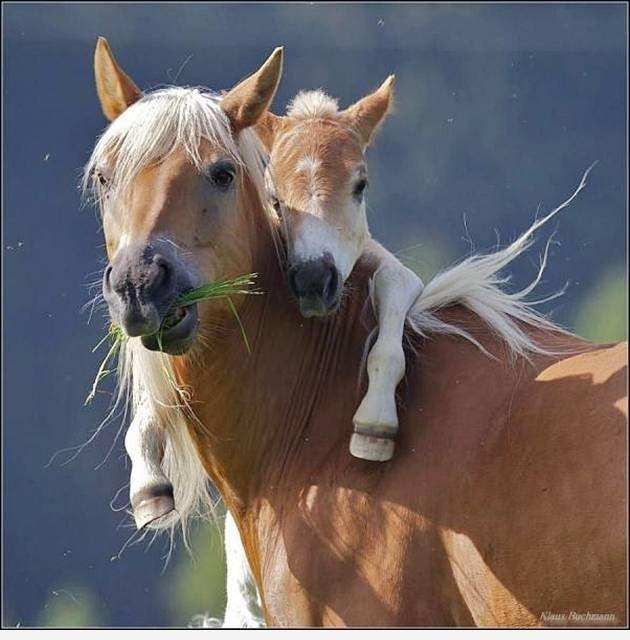 Кавайные лошадки