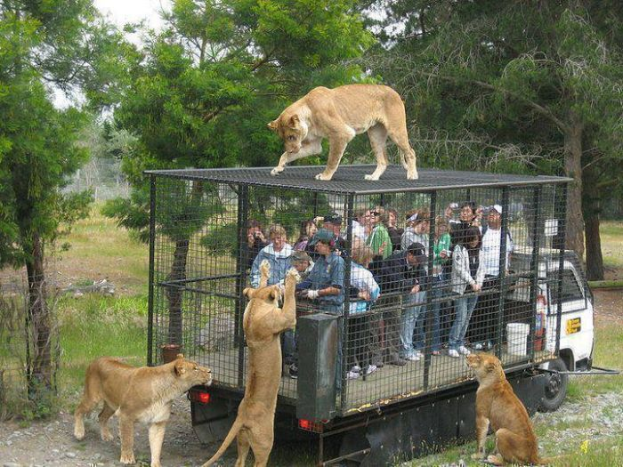 Зоопарк наоборот
