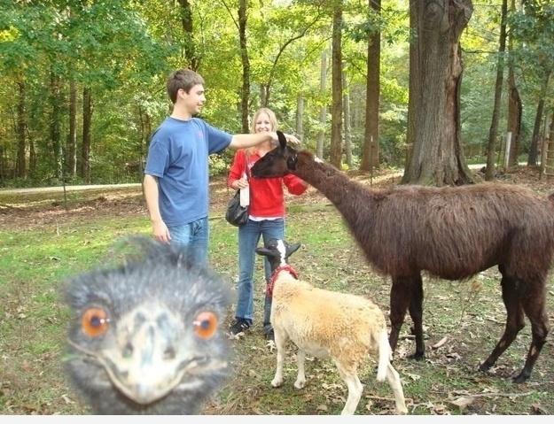 Фотобомба со страусом