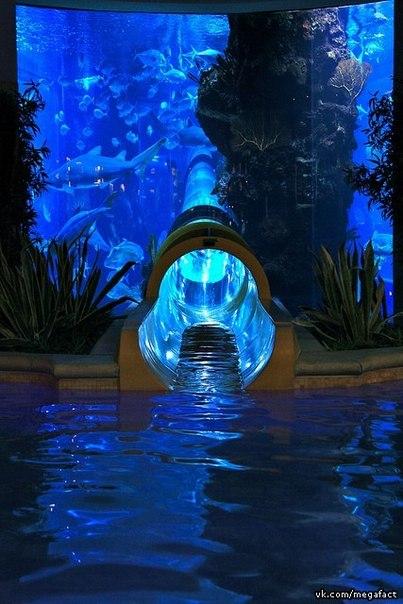 На горке сквозь аквариум