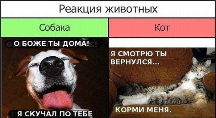 Реакция животных