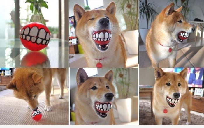 Прикольный мячик для собаки