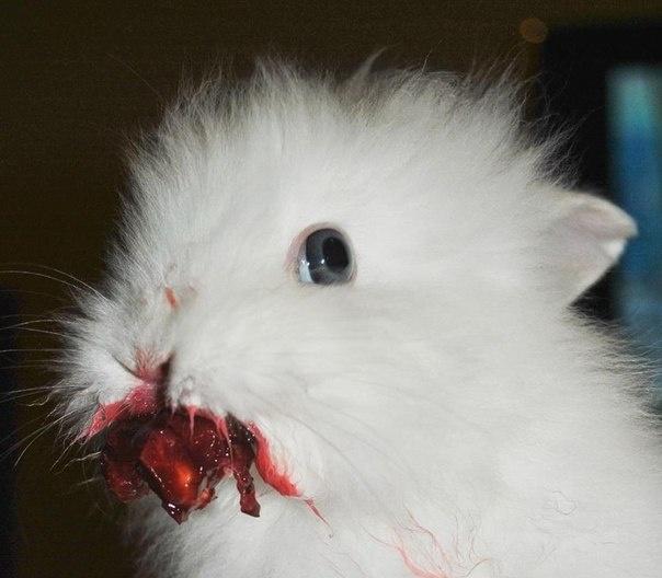 Кролик ест вишню