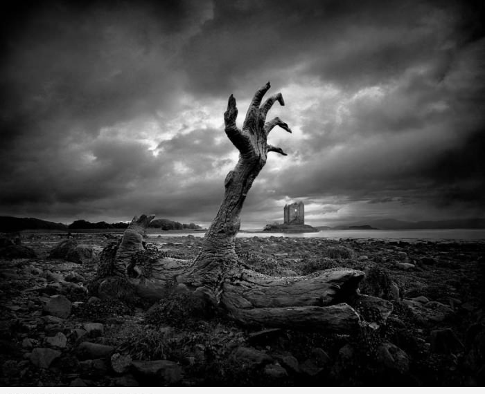 Умирающее дерево