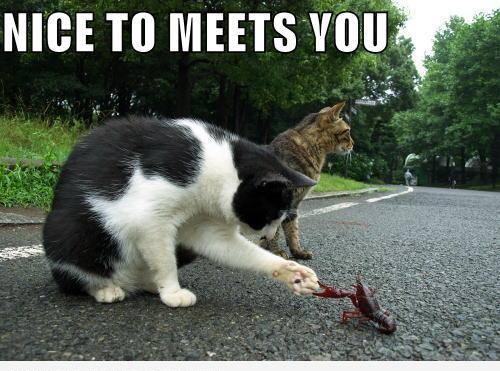 Приятно познакомиться