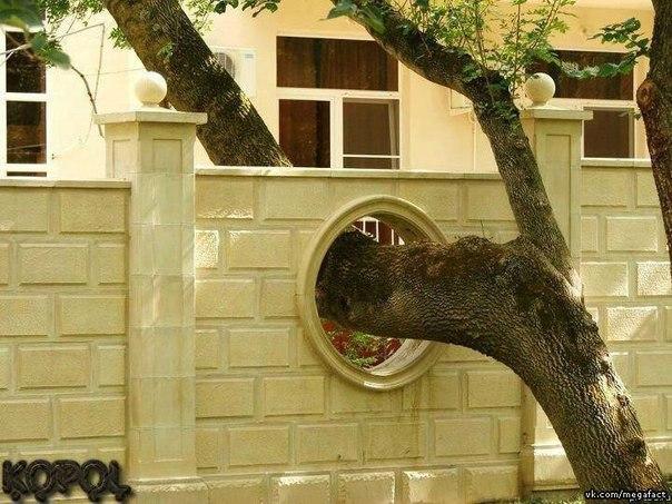 Вырез для дерева