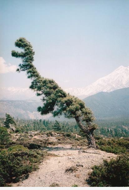 Дерево-динозавр