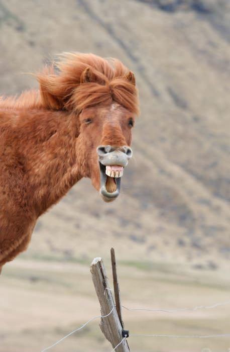 Веселый конь