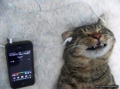 Котэ слушает музыку
