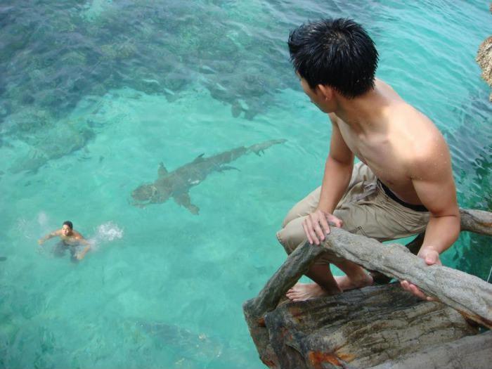 Наедине с акулой