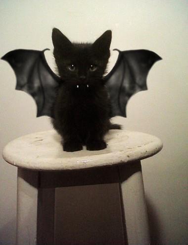 Готов к Хелоуину