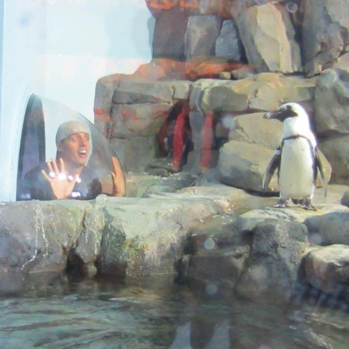 Опа, пингвин