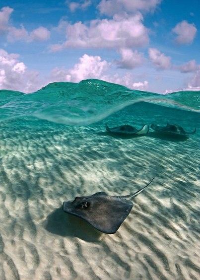 Над и под водой