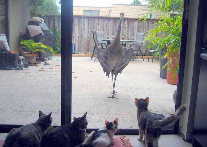 Аист и кошки