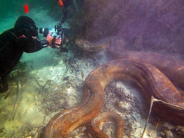 Змея под водой