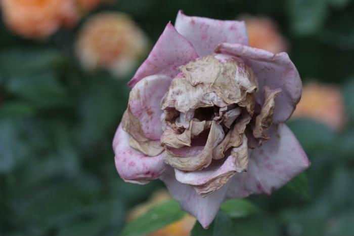 Цветок-череп