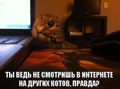 Не смотришь на других котов