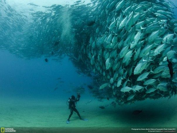 Встреча с рыбами