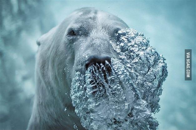 Медведь пускает пузырьки