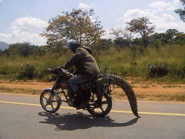 Перевозка крокодила