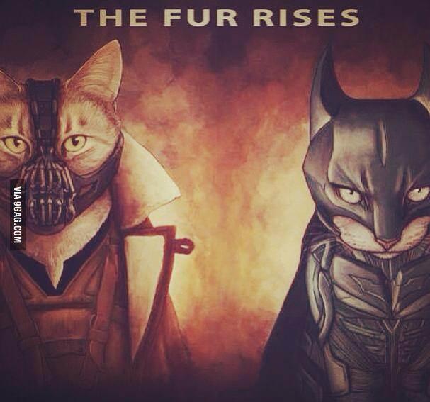 Fur rises