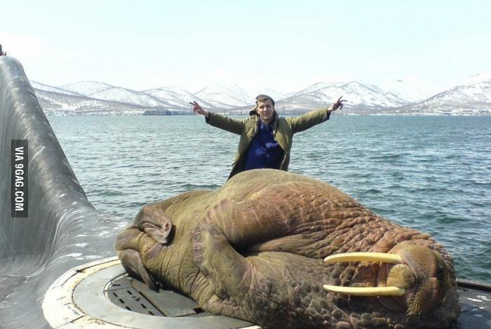 Морской лев на подлодке