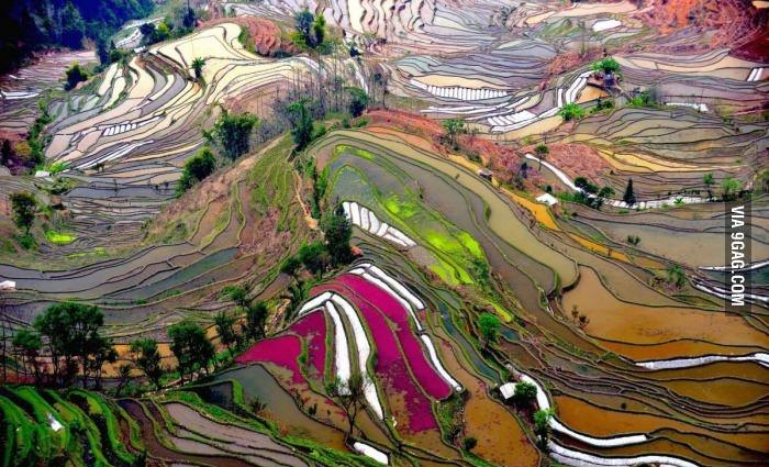 Рисовые плантации (Китай)