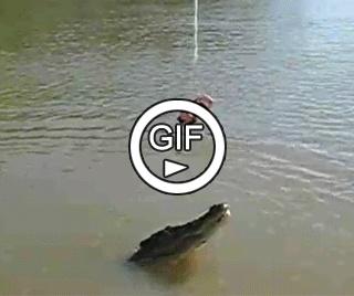 Игра с крокодилом