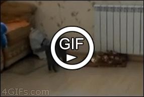 Танцы кошки