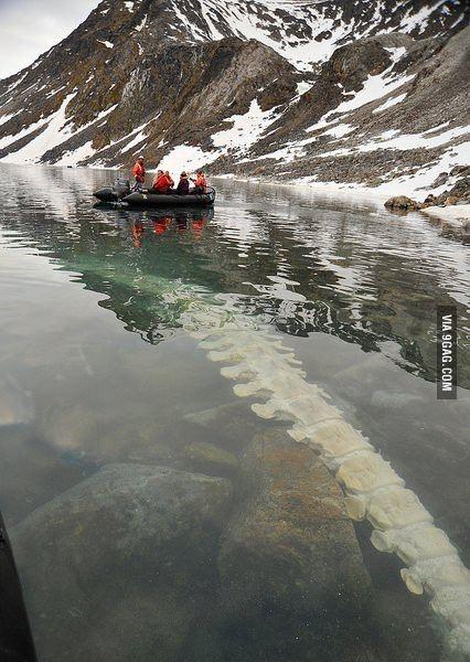 Скелет кита в Норвегии